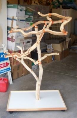 Manzanita_Tree_1-26-600-400-100